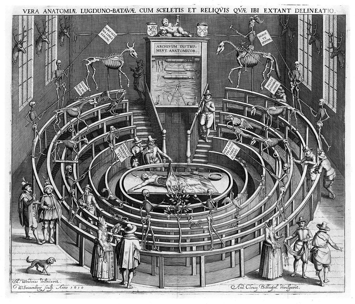 Gravure de 1612 représentant le théâtre anatomique de Leyde avec des squelettes humains et animaux dans les gradins prévus pour le public. Gravure de Willem Swanenburgh